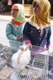 Rabbits Royalty Free Stock Photography