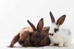Rabbits on white background Royalty Free Stock Photography