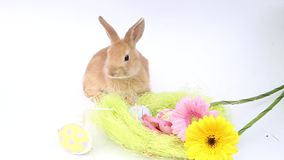 Rabbits on a white background, cute rabbits on a white background, rabbit stock footage