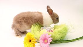 Rabbits on a white background, cute rabbits on a white background, rabbit stock video