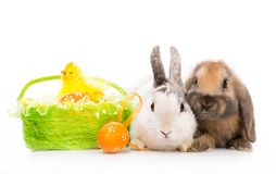 Rabbits on white Royalty Free Stock Images