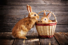 Rabbits on wooden background Royalty Free Stock Images