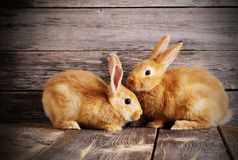 Rabbits on wooden background. Red  rabbits on wooden background Stock Photography