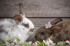 Rabbits on wooden background. Two rabbits on wooden background Royalty Free Stock Photography