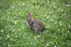 Rabbitt 1 immagini stock libere da diritti