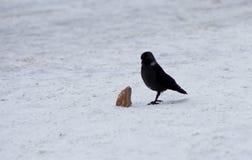 Rabe mit Stück Brot auf Schnee stockfotos