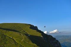 Rabenfliegen auf blauem Himmel lizenzfreie stockbilder