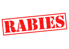 rabies Imagem de Stock