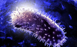 Rabies virus Royalty Free Stock Photography