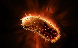 rabies virus Stock Photography