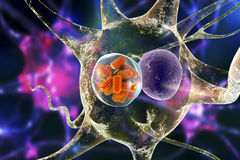 Rabies viruses in neuron Royalty Free Stock Photography