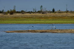Rabisha  lake and three heron bird relax at the water s  peninsula and two flying toward shore Stock Photos