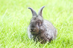 Rabit bunny in the grass Stock Photos