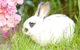 Rabit bunny in the grass Royalty Free Stock Photography
