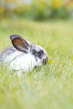 Rabit bunny in the grass Royalty Free Stock Photo