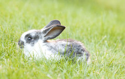 Rabit bunny in the grass Stock Images