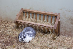 Rabit resting Royalty Free Stock Photos