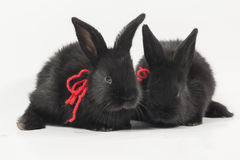 Rabits Royalty Free Stock Photography