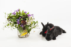Rabits Stock Photo