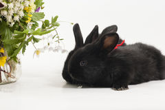 Rabits Royalty Free Stock Photo