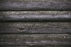 Rabitz On the background of old logs covered with mold Royalty Free Stock Photography