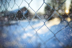 Rabitz winter background Royalty Free Stock Photography