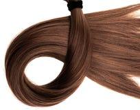 Rabo de cavalo marrom longo do cabelo no fundo branco imagem de stock royalty free