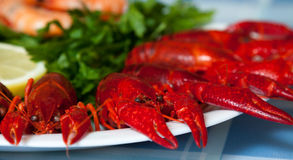 Ð¡rabs on a plate. Red crayfish on a plate stock photography