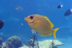 Rabtfish Stock Image