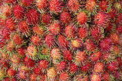 Rabutan fruit Stock Image