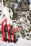 Racchette da neve nella foresta Immagine Stock