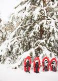 Racchette da neve nella foresta Immagini Stock Libere da Diritti