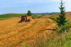 Raccogliendo nel campo, lavoro dell'azienda agricola, trattore che funziona nel campo Fotografie Stock