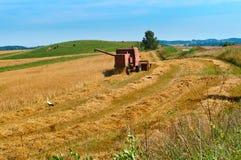 Raccogliendo nel campo, lavoro dell'azienda agricola, trattore che funziona nel campo Immagini Stock