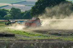 Raccogliendo sui campi nella periferia della cittadina di Neustadt Fotografie Stock Libere da Diritti