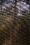 Raccoglitori della finestra nella casa della foresta Fotografia Stock
