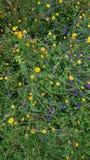 Raccoglitrice di colore del fiore immagini stock