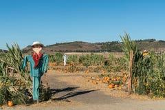 Raccolga il campo di festival con le zucche e gli spaventapasseri, ONU di Moorpark Fotografia Stock