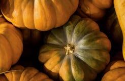 Raccolga il prodotto stagionale di autunno organico tematico della zucca del fondo dell'azienda agricola Immagini Stock Libere da Diritti
