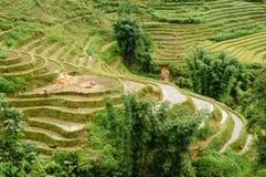 Raccolga il riso Fotografie Stock Libere da Diritti