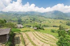 Raccolga la stagione nel Vietnam del Nord sul cielo blu dei campi del terrazzo Immagini Stock