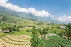 Raccolga la stagione nel Vietnam del Nord sul cielo blu dei campi del terrazzo Immagini Stock Libere da Diritti