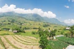 Raccolga la stagione nel Vietnam del Nord sul cielo blu dei campi del terrazzo Fotografia Stock