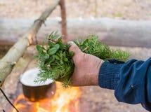 Raccolga le erbe differenti per il campo del tè Fotografia Stock