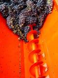 Raccolta 02 dell'uva Immagine Stock