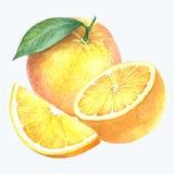 Raccolta arancio Immagine Stock