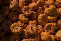 Raccolta arancio luminosa delle zucche miniatura Fotografia Stock Libera da Diritti
