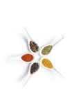 Raccolta aromatica secca variopinta delle spezie in cucchiai ceramici bianchi Fotografie Stock Libere da Diritti