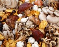 Raccolta Assorted dei funghi freschi Fotografie Stock Libere da Diritti