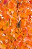 Raccolta astratta del fondo:  Foglie di caduta/tonalità dell'arancia Fotografie Stock